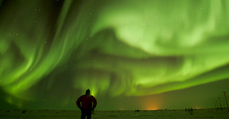 What do Northern Lights and Polar Bears have in Common?