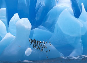 AA: Penguins on Blue Ice