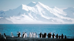 penguins-and-mountain-300x168