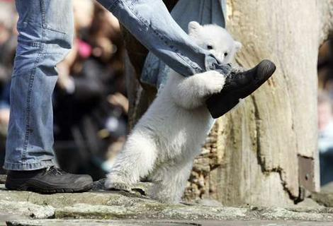 Let a baby polar bear capture your heart!