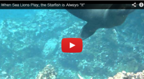 Video: The Sea Lion and the Starfish