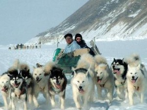 Dog sledding in Northwest Greenland
