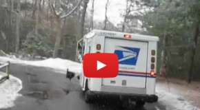 Video: Wild Turkey Takes on a Mail Truck