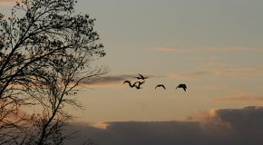 Great Migrations—from Small Creatures