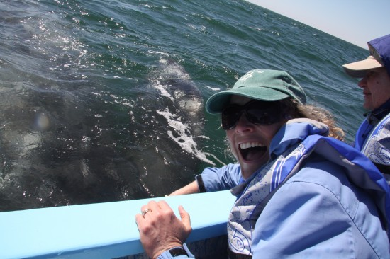 Close Encounters with Whales: Part I