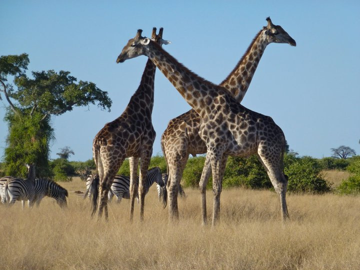 10 Things to Take On Your Africa Safari