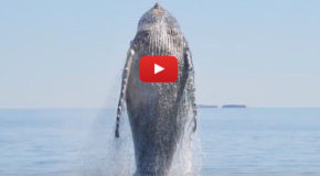 Video: Thank-You Note from a Whale