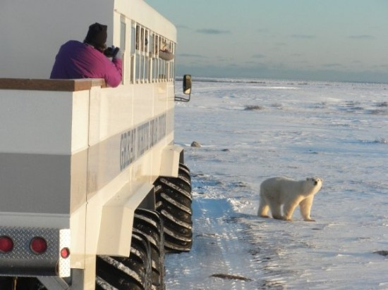 Travel + Leisure Goes Polar Bear Watching in Churchill with Nat Hab