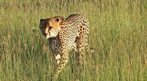 Happy Mother's Day 2012, to Cheetahs, Gemsboks and You
