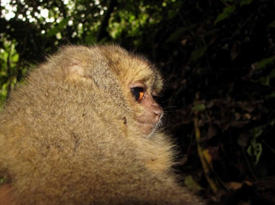 Eight New Mammals Discovered in Peru's Cloud Forest