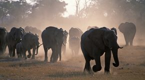CITES: Can a Crackdown on Wildlife Crime Wait Another Year?