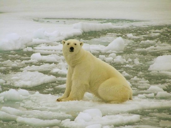 Breaking News: Bad Week for Polar Bears