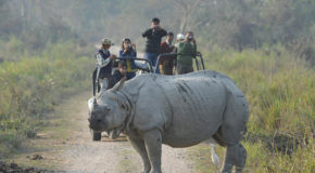 Indian Rhino Numbers Are Up, But Will Preserves Ultimately Help Poachers?