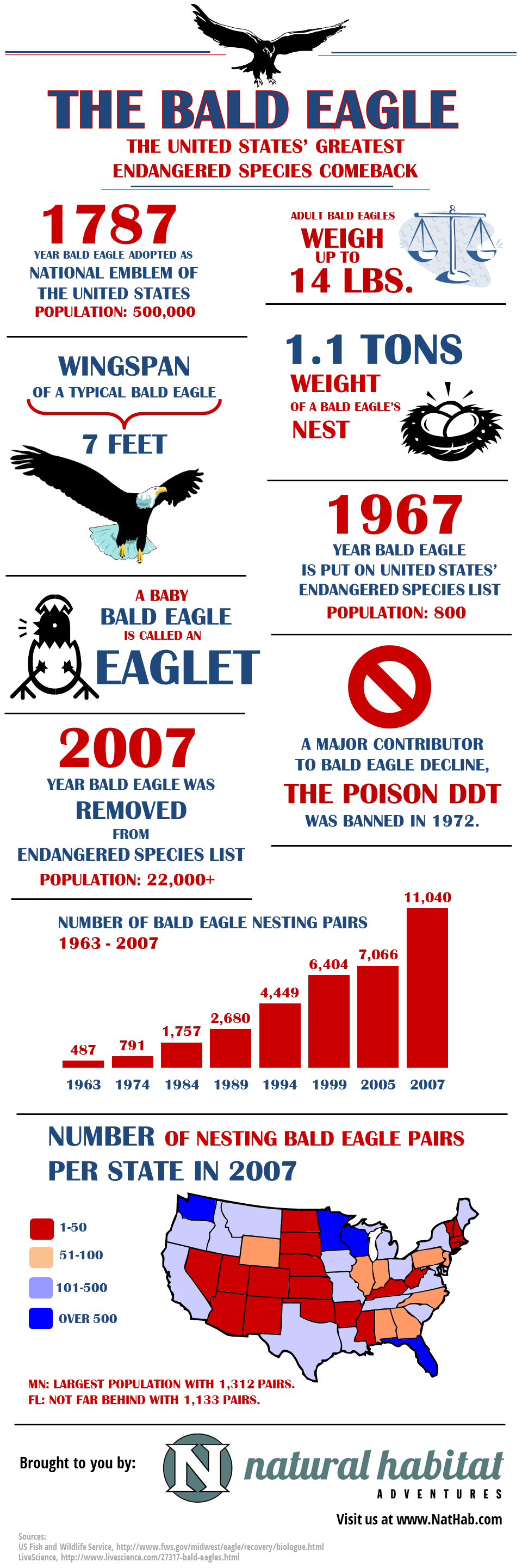 Bald Eagle Facts for 4th of July [Infographic]