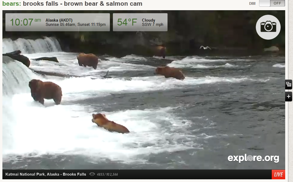 Live Bear Cam Screen Shot