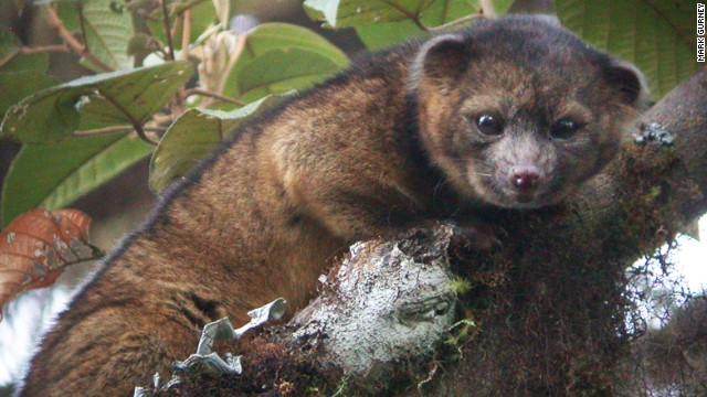 New Mammal Species Discovered in the Andes