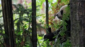 Travel Tales: Baby Pandas & China's Unseen Treasures