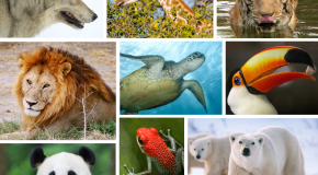 Happy National Wildlife Day!