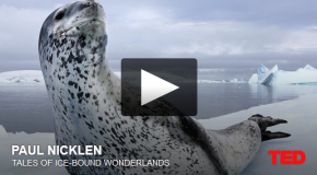 Tales of Ice-Bound Wonderlands – A Ted Talk by Paul Nicklen