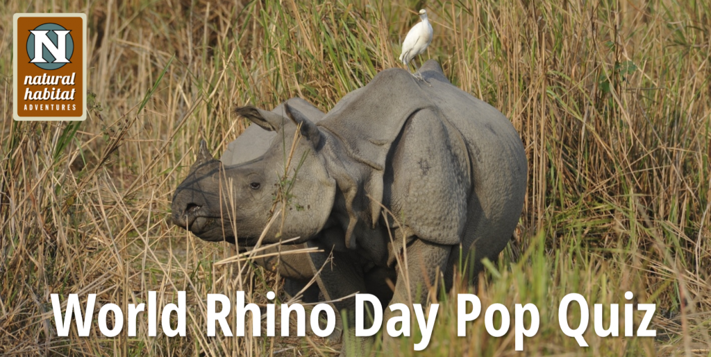 World Rhino Day Pop Quiz