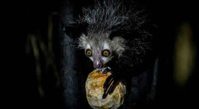 Video: The World's Scariest Creatures