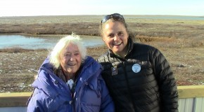 Tracking Polar Bears at 100: Meet Elsa Bailey!