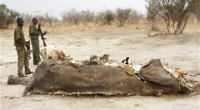 Poachers Kill 300 Elephants in Zimbabwe Using Cyanide
