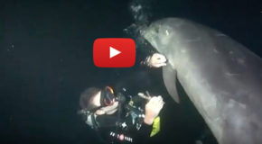 A Dolphin Caught in Fishing Line Asks for Human Help
