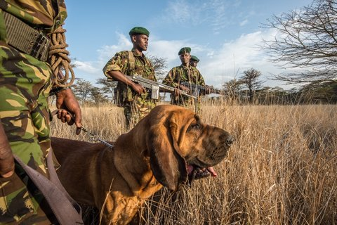 Rhino guards in Kenya
