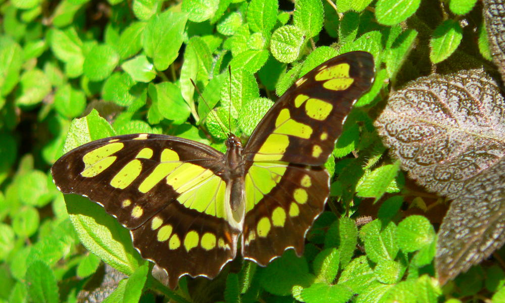 Nature photo of a butterfly in Belize