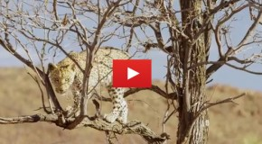 Video: Only in Namibia