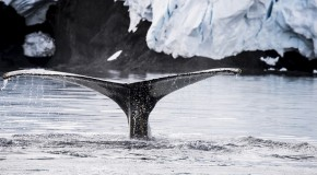 Conservation Win for Whales in Antarctica