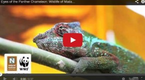 Video of the Week: The Wondrous Wildlife of Madagascar