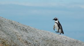 Will Climate Change Increase Antarctica's Biodiversity—Or Diminish It?