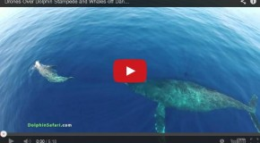 Video: Drones over Dolphins