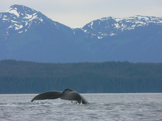 Whales and mountains in Alaska's Coastal Wilderness