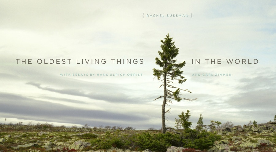 Oldest Living Things In the World, Book, Rachel Sussman