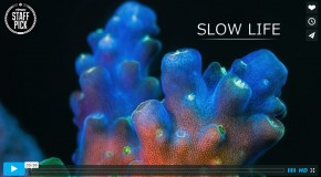 Video of the Week: Slow Life – An Underwater Timelapse
