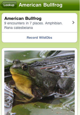 WildObs_screenshotbullfrog