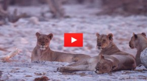 Video of the Week: Pride of Namibia