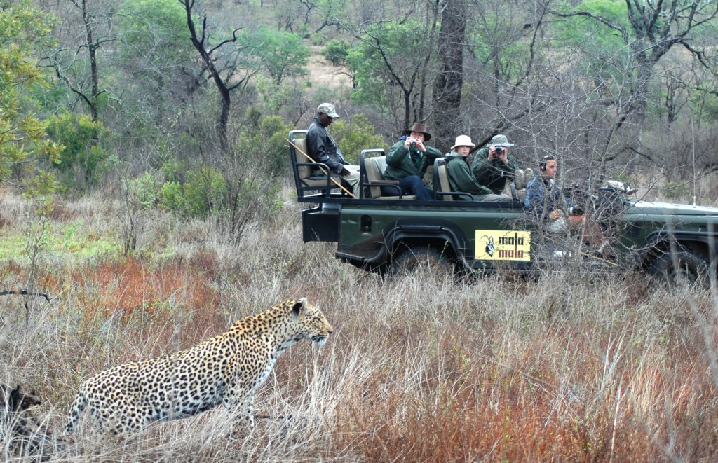 Travelers scouting in South Africa. Photo © Natural Habitat Adventures