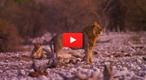 Video: The Guardians of Namibia's Wildlife