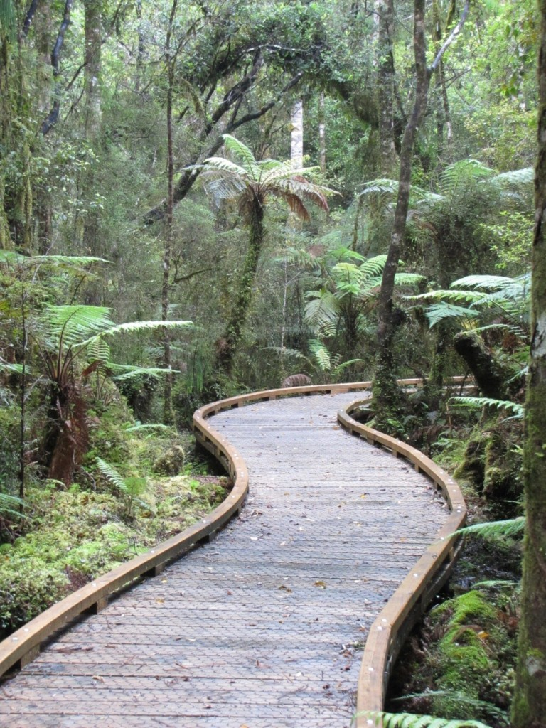 Westland National Park, Rainforets, New Zealand