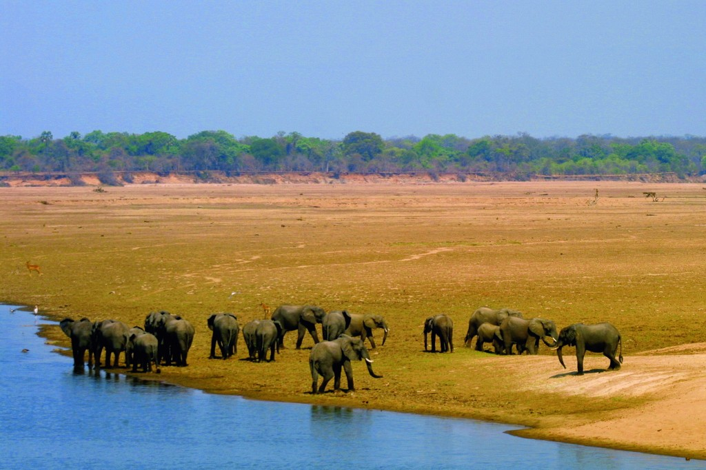 Travelers have the chance to see elephants in the Luangwa Valley. Roughly half of Africa's total elephant populations live within Angola, Botswana, Namibia, Zambia and Zimbabwe. © Wilderness Safaris