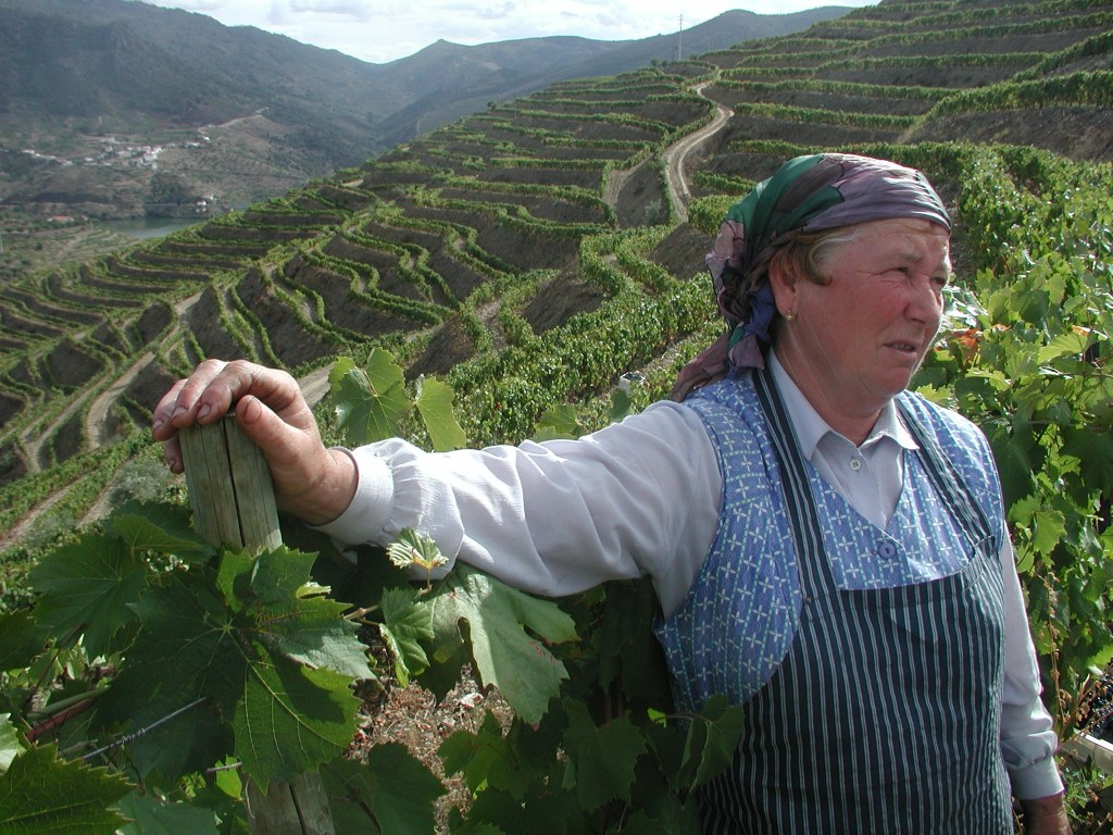A visit to Portugal will often include visits to quintas, the Portuguese word for farm, where grapes and other produce are grown and harvested. © Olaf Malver/NHA