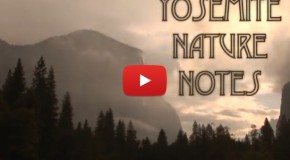 Video: Yosemite National Park in Print