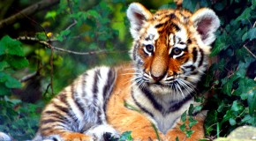 International Tiger Day is Tomorrow!