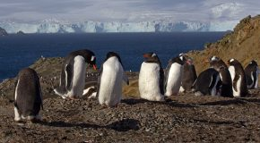 Photographs from an Antarctica Expedition