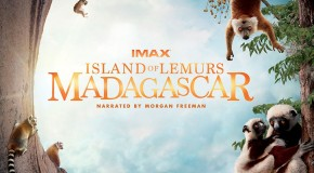 At an IMAX Theater Near You – Island of Lemurs: Madagascar