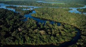 10 Watery Wetland Facts about the Pantanal